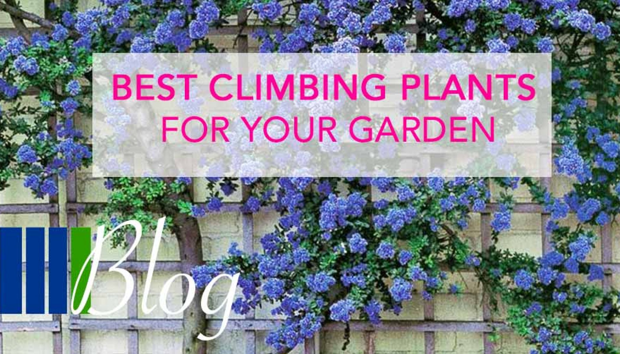 Best Climbing Plants For Your Garden Four Seasons Fencing Shop