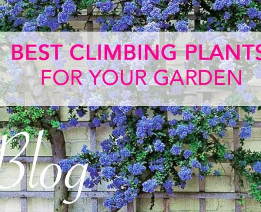 Best Climbing Plants For Your Garden
