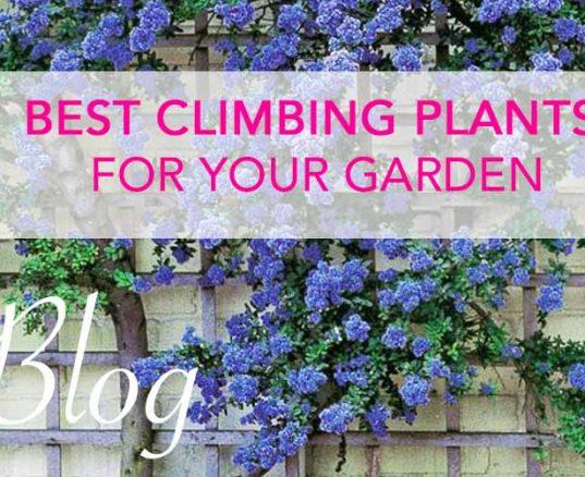 Best Climbing Plants For Your Garden