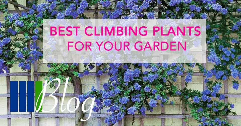 Best Climbing Plants For Your Garden Four Seasons