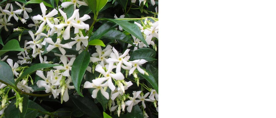 Best Climbing Plants For Your Garden Four Seasons
