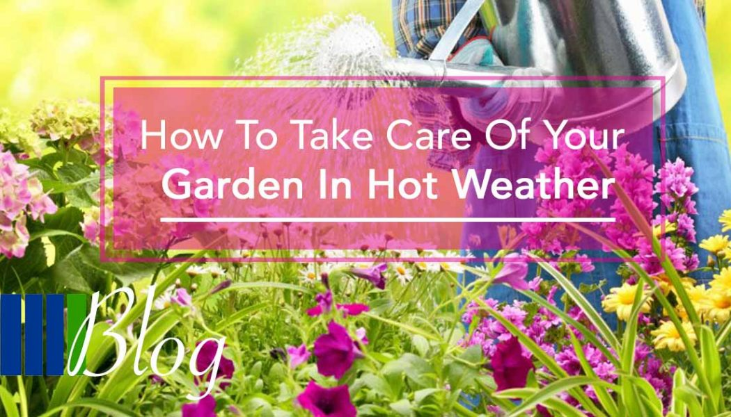 How to care for your Garden in Hot Weather