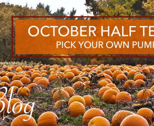 October Half Term – Pick Your Own Pumpkins