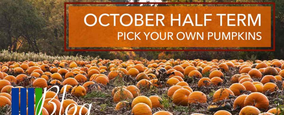 October Half Term – Pick Your Own Pumpkins