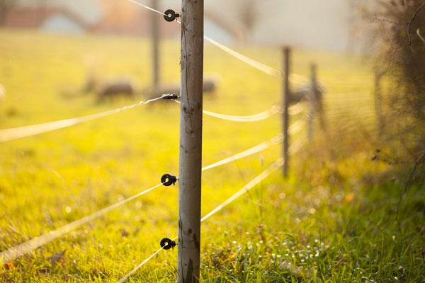 Electrical Agricultural Fencing