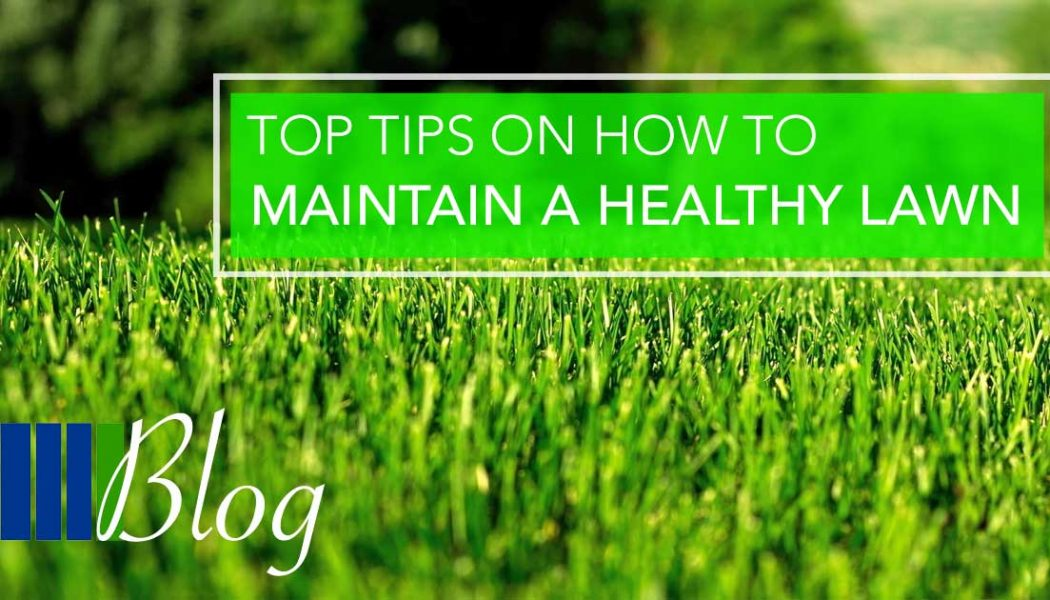 Top Tips To Maintain A Healthy Lawn