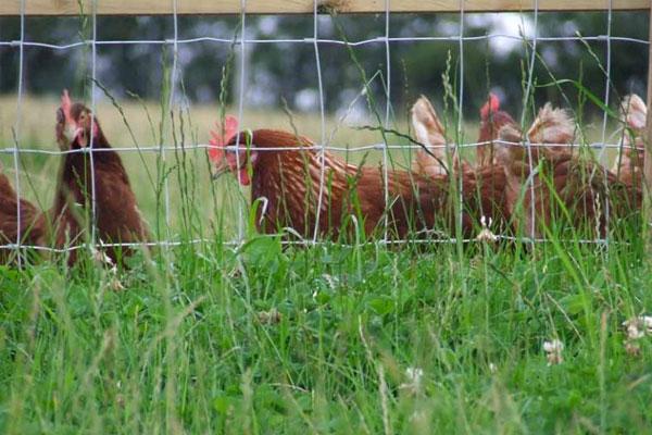 Agricultural Fencing in Ashford Kent